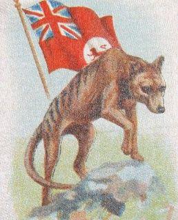 Vintage tobacco cigarette silk   animals with flags #22 Tasmanian wolf