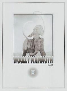 WOOLLY MAMMOTH hair speck, extinct,
