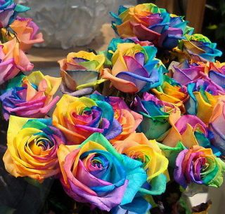 Seeds Rare Rainbow Rose Seed For Your Lover Rainbow Rose Flower Seed