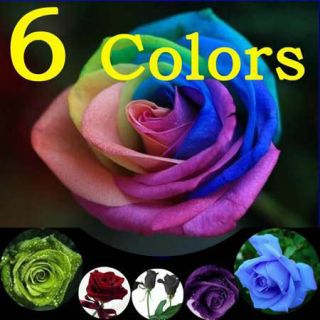 Rose Seeds Blue Red Purple Green Black Rainbow Petal Plant Home Garden