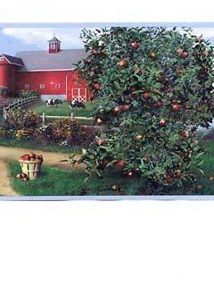 LOT of 3 rolls apple tree farm barn country wallpaper border 45 total