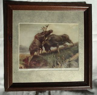 ATKINSON FOX FRAMED PRINT A BATTLE ROYAL BULL MOOSE FIGHTING (E