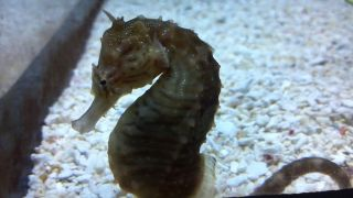 Photo of Sea Horse by Artist James D Gee Jr  delivered via Email
