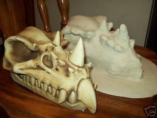 Large Dragon Skull / Latex mold for concrete/plast​er