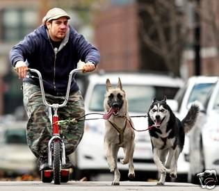 K9 Z 20 Scooter – Ultimate Dog Sled Scooter   US Made