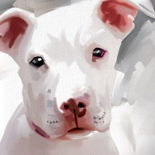 Pitbull White Pit Bull Dog Original Art Painting Canvas Giclee Print