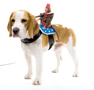 Monkey Back Riding Dog Rider Pet Animal Puppy Funny Costume Halloween