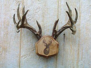 Laser Engraved The Deer Stand Antler Mounting Kit