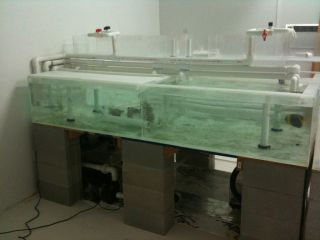 gallon saltwater fish reef shark tank acrylic retail aquarium system