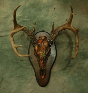 CAMO REPLICA DEER SKULL MOUNT KIT taxidermy horns NO ANTLERS INCLUDED
