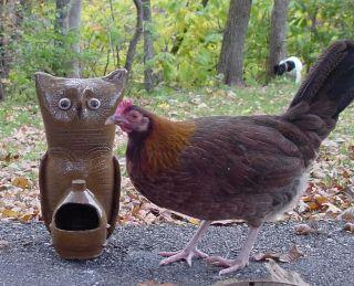Stoneware Poultry Chicken Chick Bird Cat Dog Feeder Waterer Hand Made