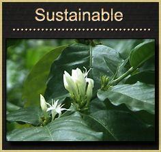 Organic Coffee Co 2 lb Bag Panama Finca Santa Barbara Whole Bean