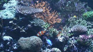 Sea World Aquarium DVD Saltwater Aquarium Movie