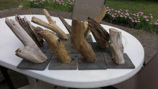 Bearded Dragon and Iguana Driftwood Reptile Lizard Basking Log
