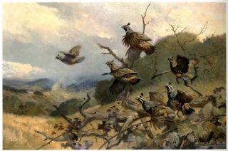 George Belmore Browne Wildlife Art Game Birds Alaska