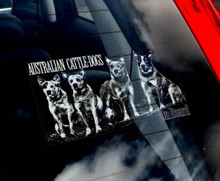 Cattle Dogs  Car Window Sticker  ACD Cattledog/Cattledogs Blue Heeler