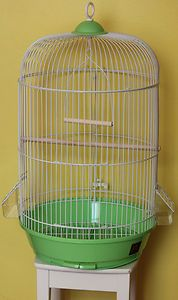 Cage Bird New Real Wood for Parakeet Canary Parrot Round Cage Green