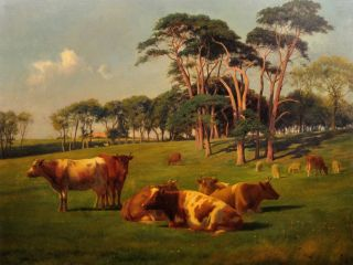cattle and sheep in pasture