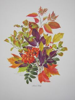 Anne Dowden Autumn Foliage Flower Leaves Ed Print