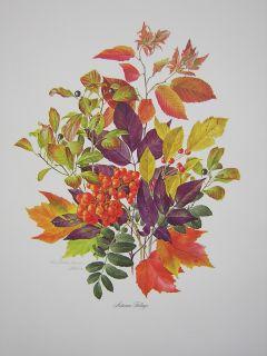 Anne Dowden Autumn Foliage Flower Leaves Ed Print