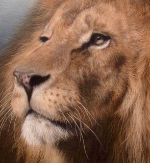 African Lion Original Rachel Stribbling Oil Painting