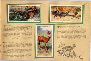 Tobacco Card Album & Cards, John Player,ANIMALS OF THE COUNTRYSIDE