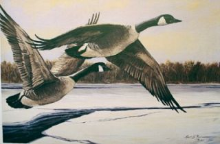 Ross B Young L E Signed Print Canada Geese
