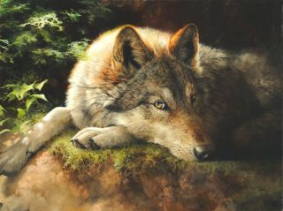 Bonnie Marris Hidden Secrets Giclee Paper Wolf 200 200