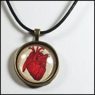 Anatomical Heart Corazon Pendant Necklace Anatomy Love