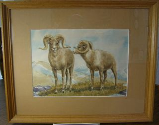 Framed Vintage Watercolor Painting   DALL SHEEP