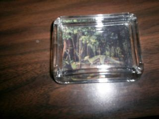 Stygimoloch Dinosaur Trading Card Under Glass in A Ashtray