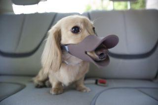 Oppo Dog Muzzle Quack Duck bill designer pet protection Pink( Large