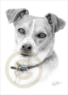 Dog Jack Russell Pencil Drawing Art Limited Edition Print Signed by