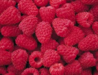 Can Freeze Dried Raspberries Dehydrated Survival Food