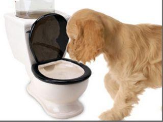 Toilet Bowl Water Dish Dog Pet Small Animal Watering Bowl Ceramic