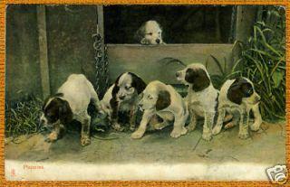 English Springer Spaniel Puppy Group Old Dog Postcard