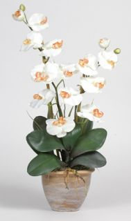 double stem phalaenopsis silk flower arrangement cream