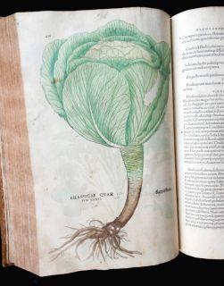 1542 Fuchs De Historia Stirpium Herbal 500+ Full Page Folio