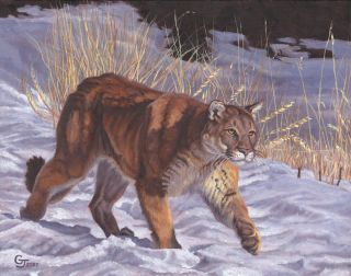 The Prowl cougar canvas giclee print by Gary Johnson signed numbered