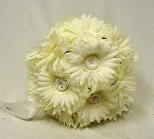 Gerbera Daisies 9 Large Balls Cream Ivory Wedding Flowers Pew Bows