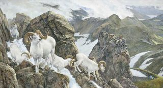 Art of Hunting The High Life Dall Sheep by Ron Van Gilder