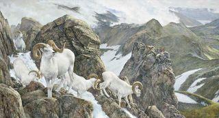Art of Hunting The High Life Dall Sheep by Ron Van Gilder