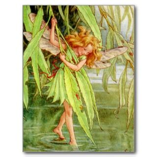 The Willow Fairy Postcard