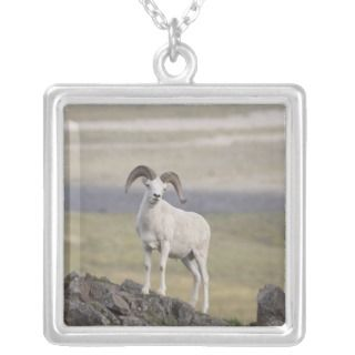 Dall sheep ram poses on Marmot Rock Personalized Necklace