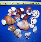 All Living Things Hermit Crab Habitat Kit New