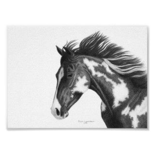 American Quarter Horse Paint drawn in charcoal pencil