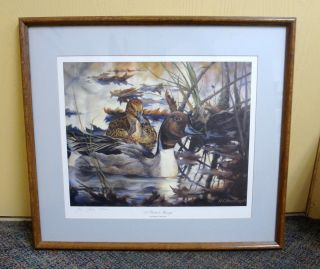 Pintail Mirage by Heiner C Hertling Ducks Unlimited Framed Print