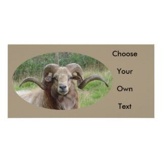Sheep   Rams Head Personalized Photo Card