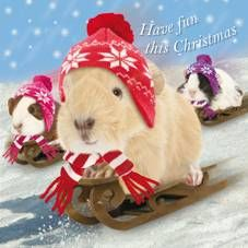 Guinea Pig Snow Antics Boxed Christmas Cards   10 Cards Per Pack of 2