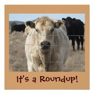 Its a Roundup! Cows   Cattle Drive Celebration Custom Announcements